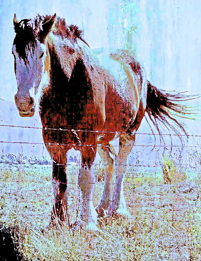 Digital Montage Photograph - Workhorse by Cynthia Powell