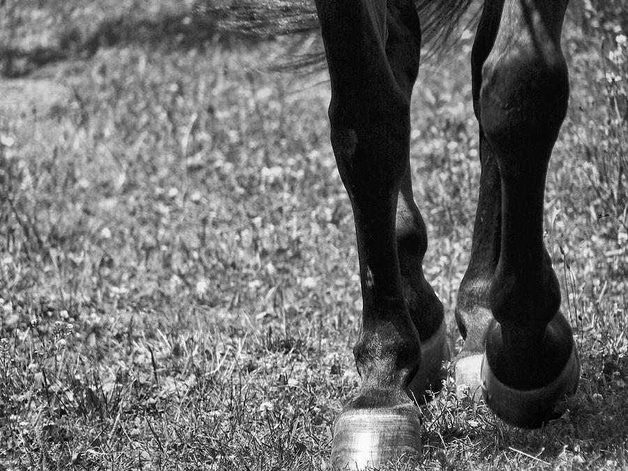Horse Photograph - Working Trot by JAMART Photography
