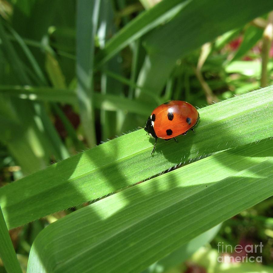 Beautiful Photograph - World Of Ladybug 1 by Jean Bernard Roussilhe