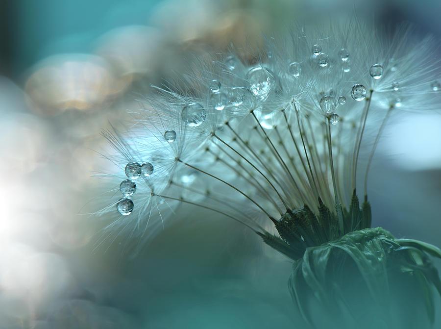 Aesthetic Photograph - World Of The Drops... by Juliana Nan