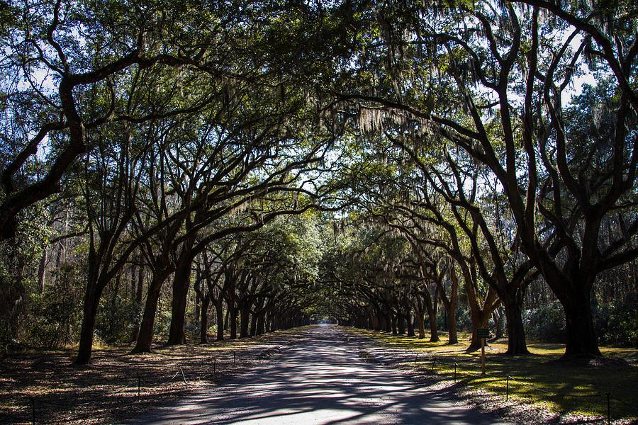 Georgia Photograph - Wormsloe Avenue by Robert J Caputo