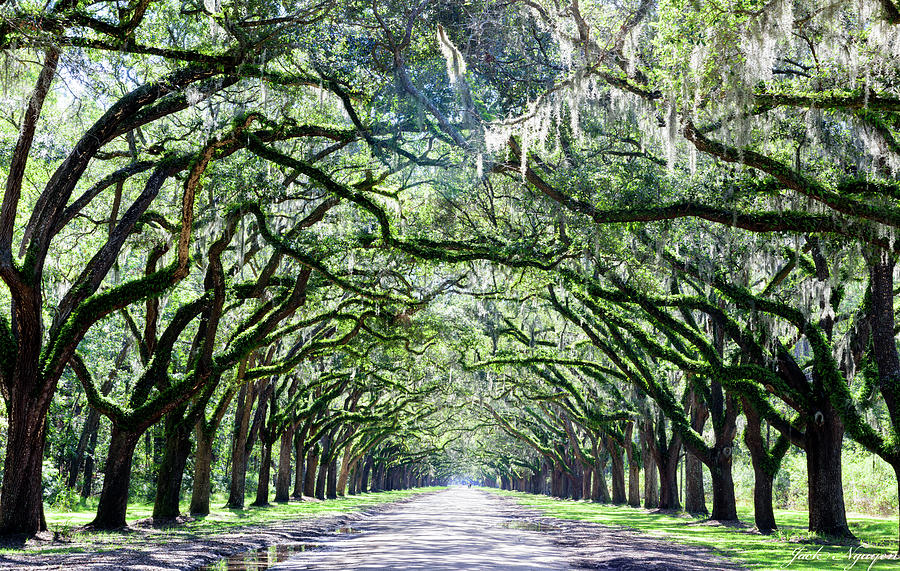 Wormsloe Historic Site by Jack Nguyen