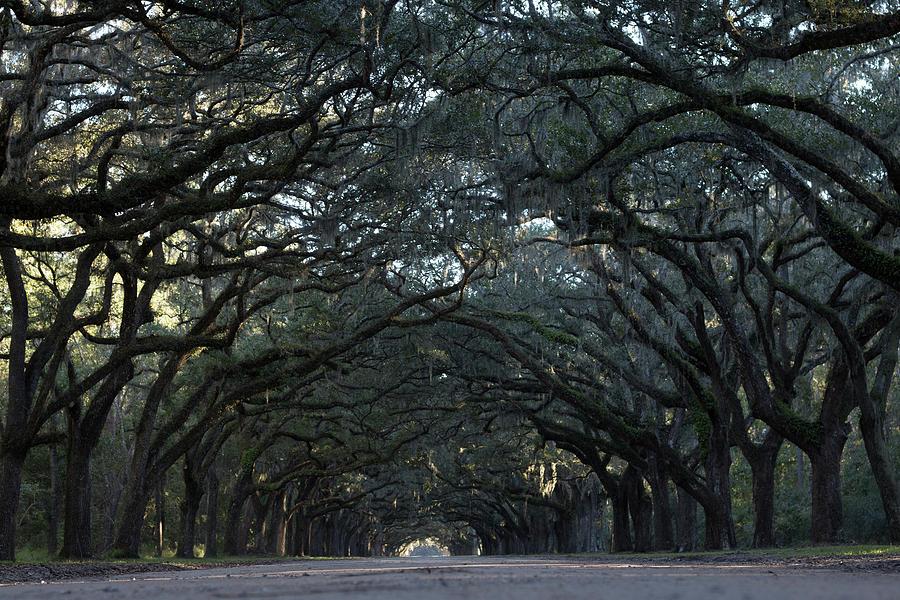 Savannah Photograph - Wormsloe  by Mike Dunn