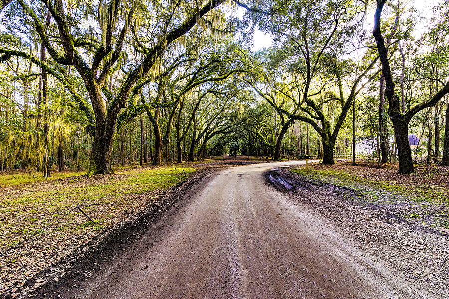 Wormsloe Road by Anthony Baatz