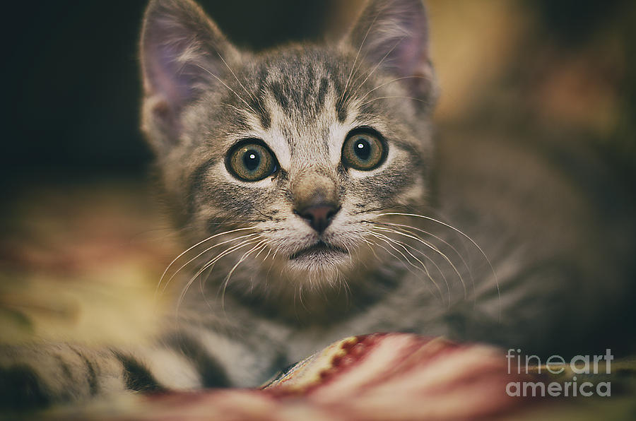 Gatto Photograph - Worried little eyes by Alessandro Giorgi Art Photography