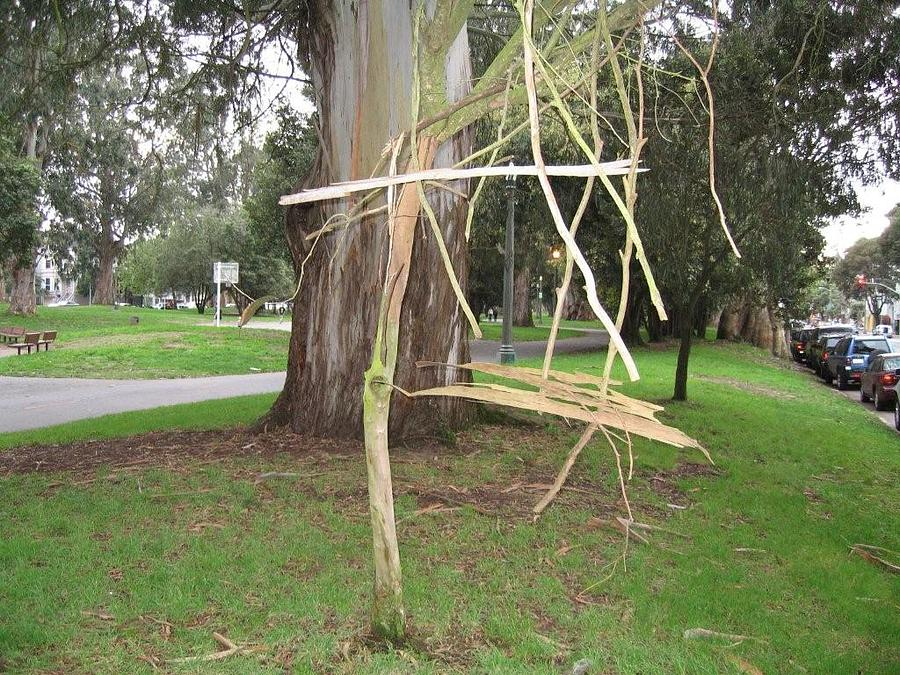 Earth Art Sculpture - Woven Branch Installation Piece by Elizabeth Starr