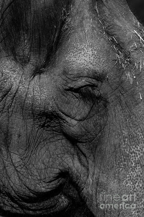 Elephant Photograph - Wrinkles by Leia Hewitt