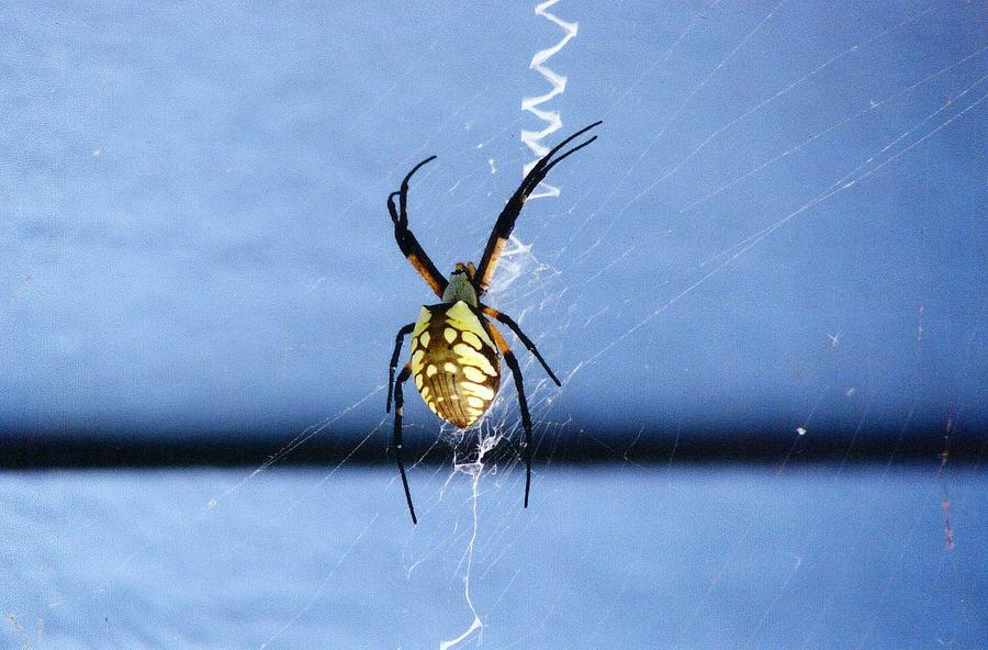 Spider Photograph - Writing On The Web by Renee Cain-Rojo