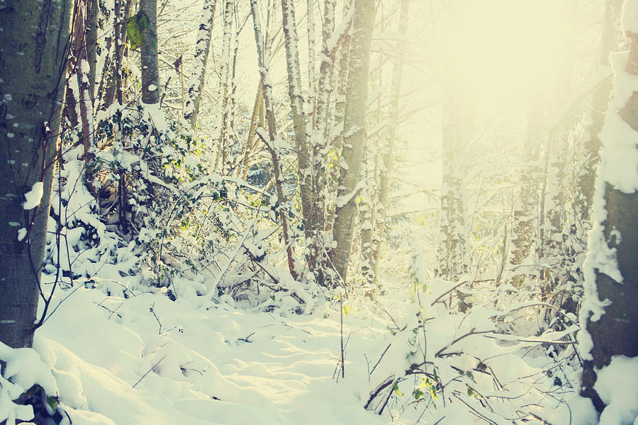 Snow Photograph - Wunderkind by Kerry Langel
