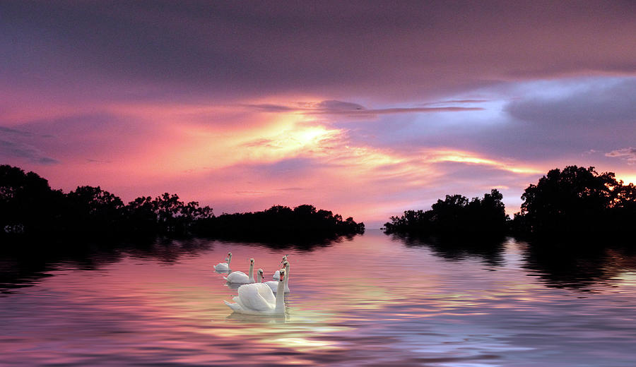 Swans Photograph - Sunset Swans by Jessica Jenney