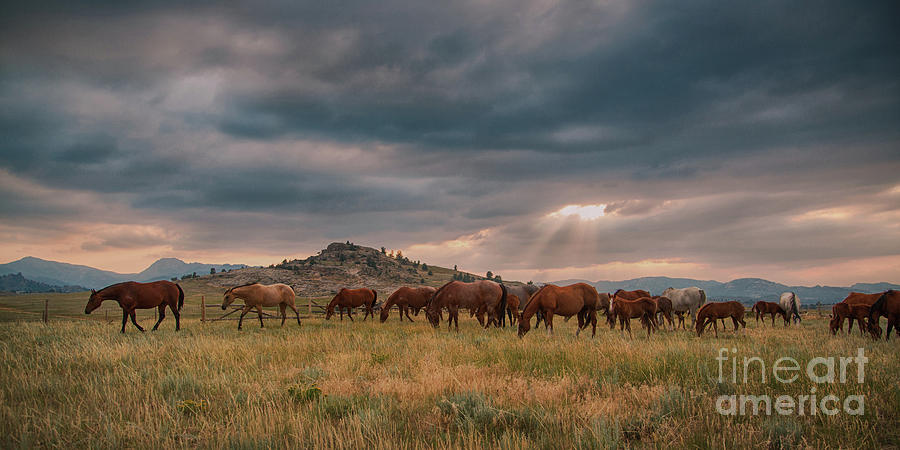 Wyoming Evening by Terri Cage