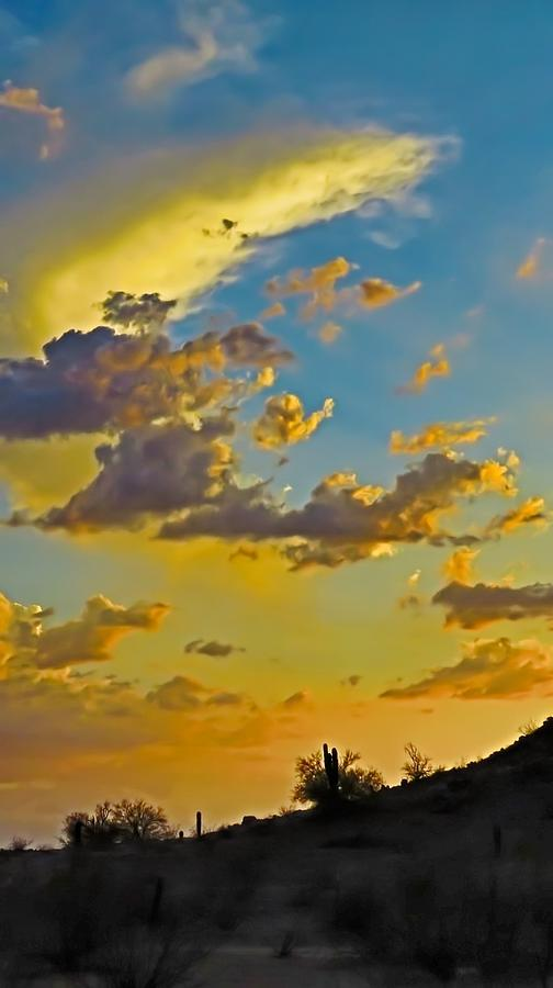 Arizona Photograph - Y Cactus Sunset 10 by Judy Kennedy