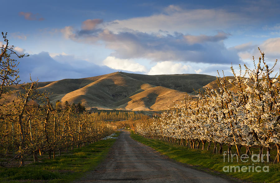 Yakima Valley Photograph - Yakima Valley Spring by Mike  Dawson