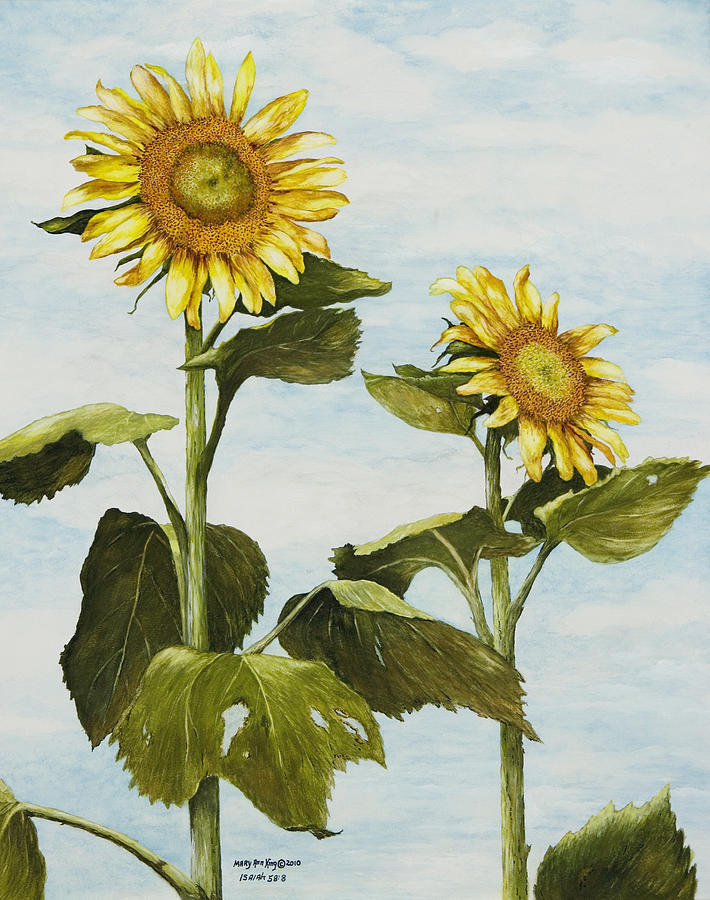 Yellow Sunflower Watercolor Painting Painting - Yanas Sunflowers by Mary Ann King