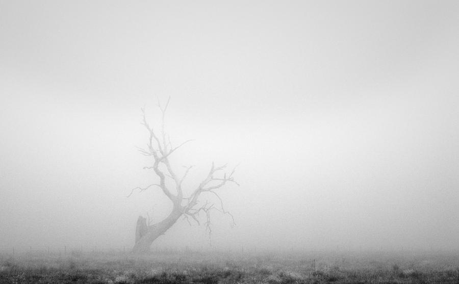 Tree Photograph - Yandembah by Mihai Florea
