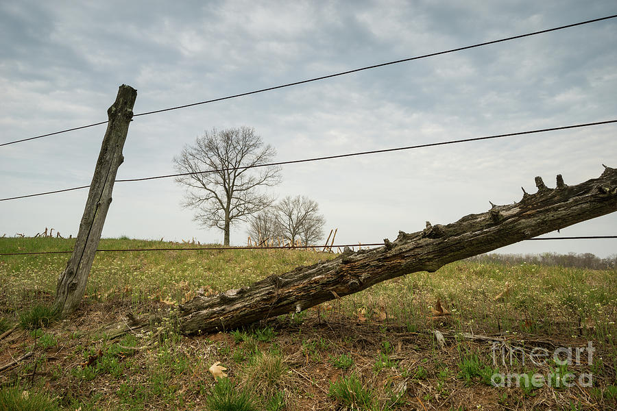 Yankee Farmlands No 63 - Springtime Farm And Cedar Fence Photograph ...