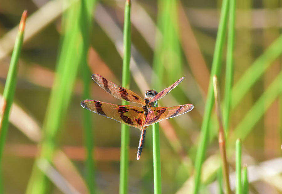 Halloween Pennant Photograph - Yankee Wins The Pennant by William Tasker