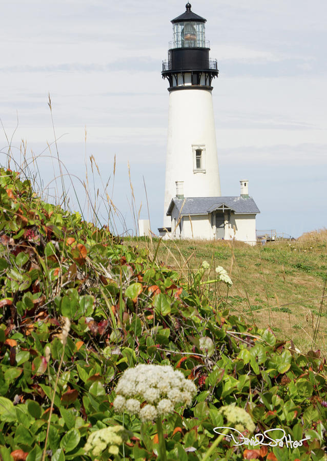 Yaquina Head Lighthouse by David Salter