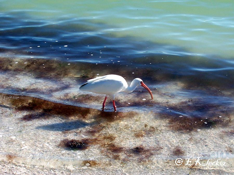Bird Photograph - Yay Seaweed by Elizabeth Klecker