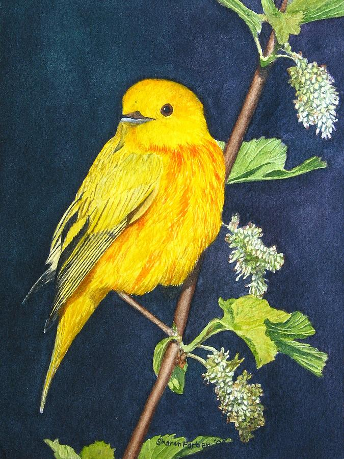 Bird Painting - Yelllow Warbler by Sharon Farber
