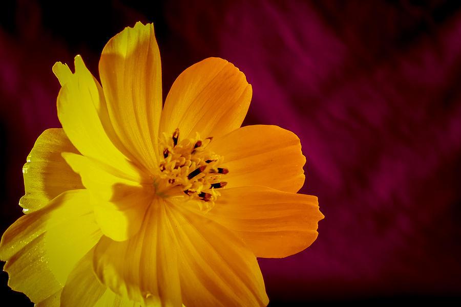 Flower Photograph - Yellow-1 by Fabio Giannini
