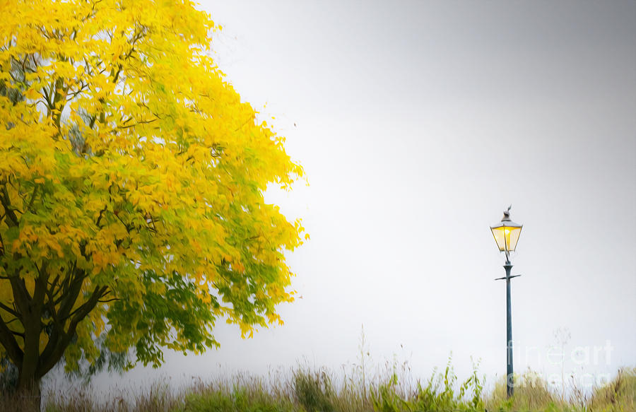 Tree Photograph - Yellow And Golden by Jason Christopher