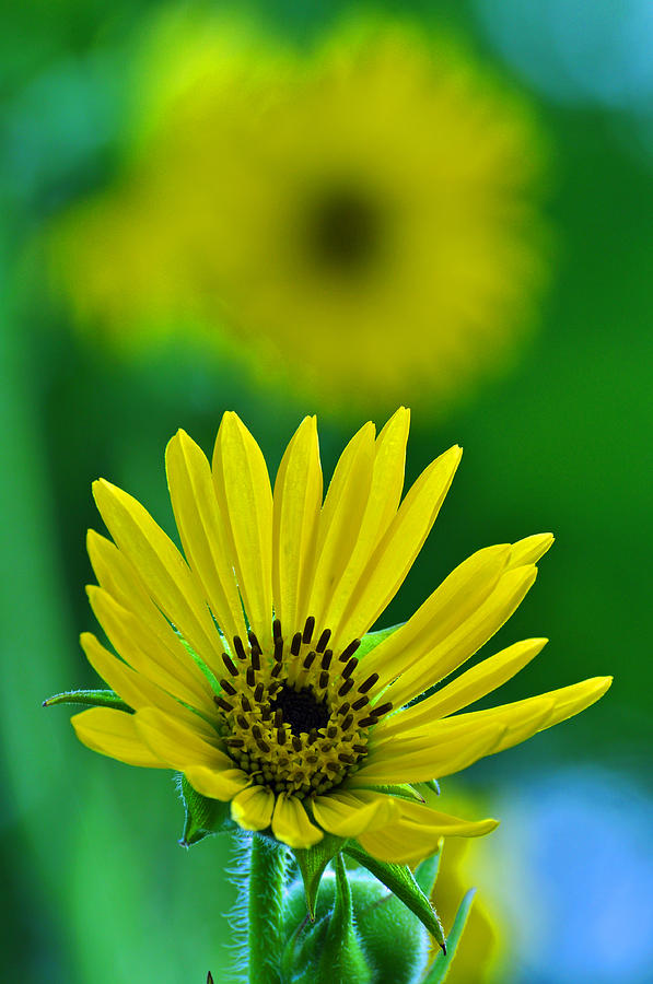 Flower Photograph - Yellow And Green 3 by Peter  McIntosh