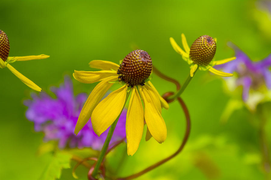 Yellow And Purple Photograph