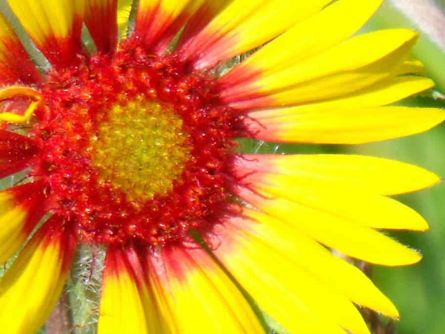 Yellow Photograph - Yellow by Angela Christine