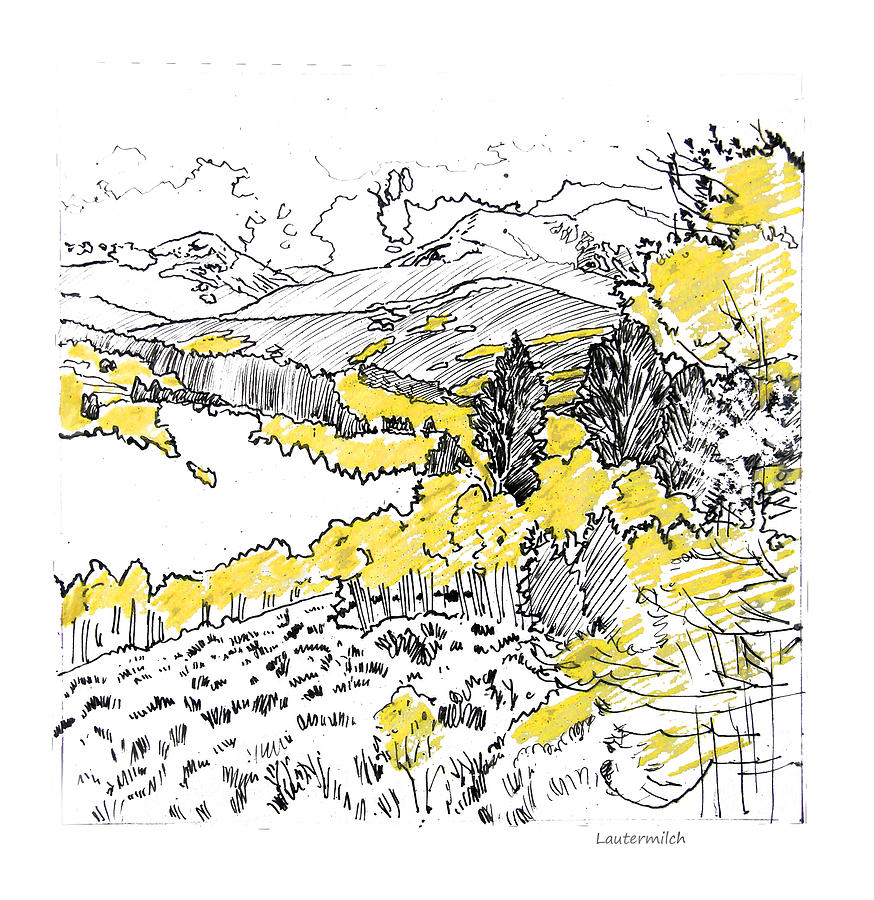 Yellow Aspens Drawing - Yellow Aspens Colorado Mountains by John Lautermilch