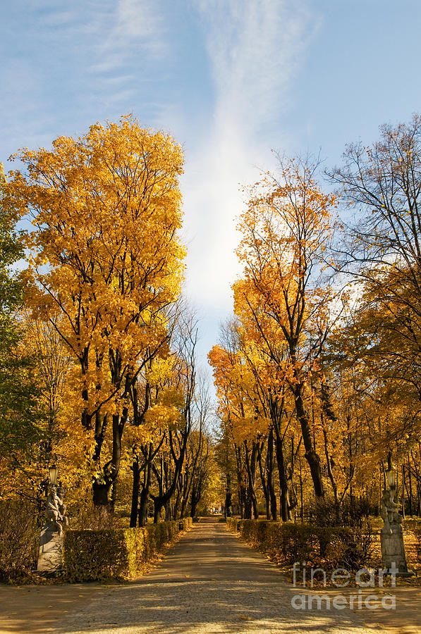 Yellow Autumn Trees In Park Alley Photograph