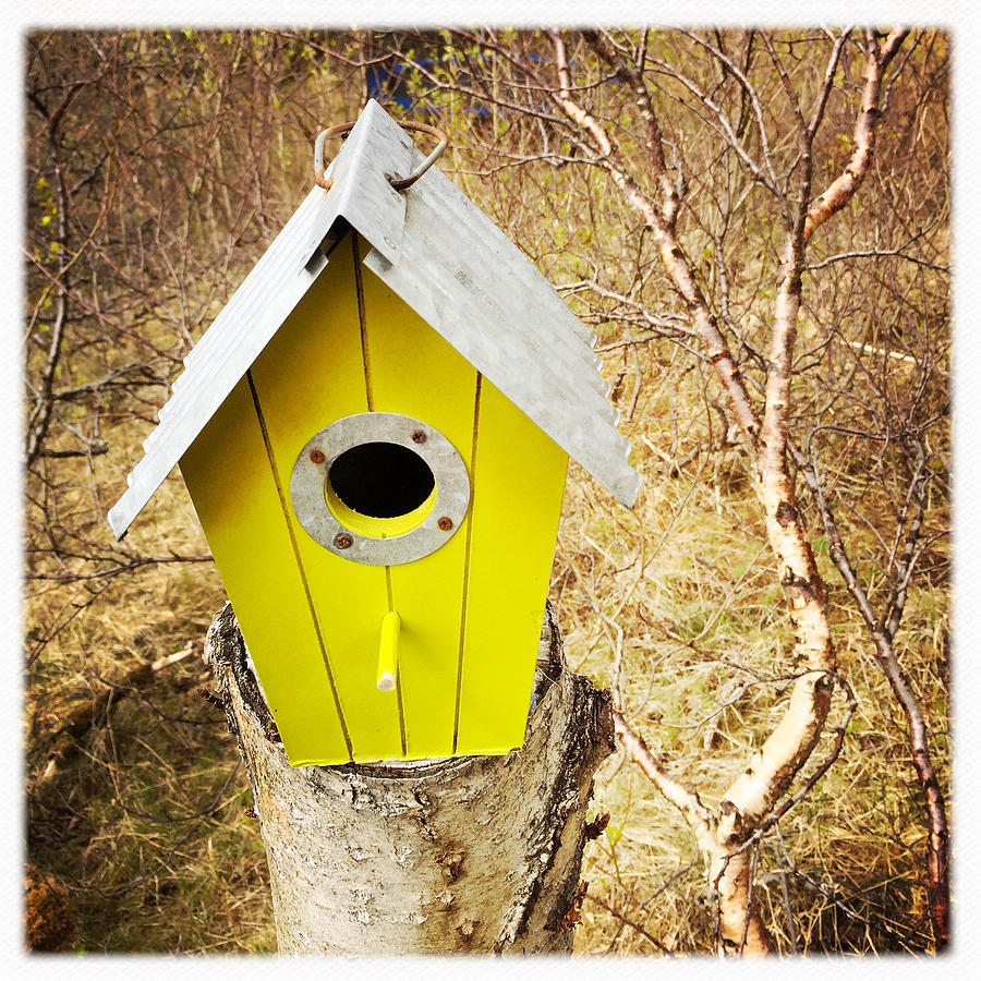 Nesting Box Photograph - Yellow Bird House by Matthias Hauser