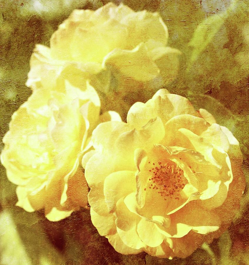 Roses Photograph - Yellow Bunch Vintage by Cathie Tyler