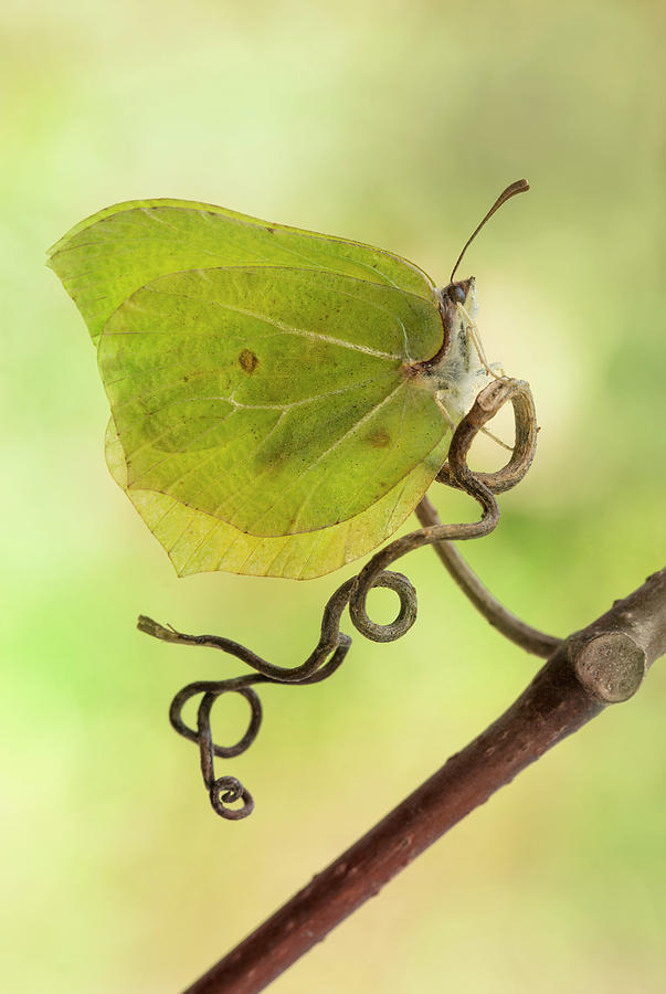 Butterfly Photograph - Yellow Butterfly On The Branch by Jaroslaw Blaminsky