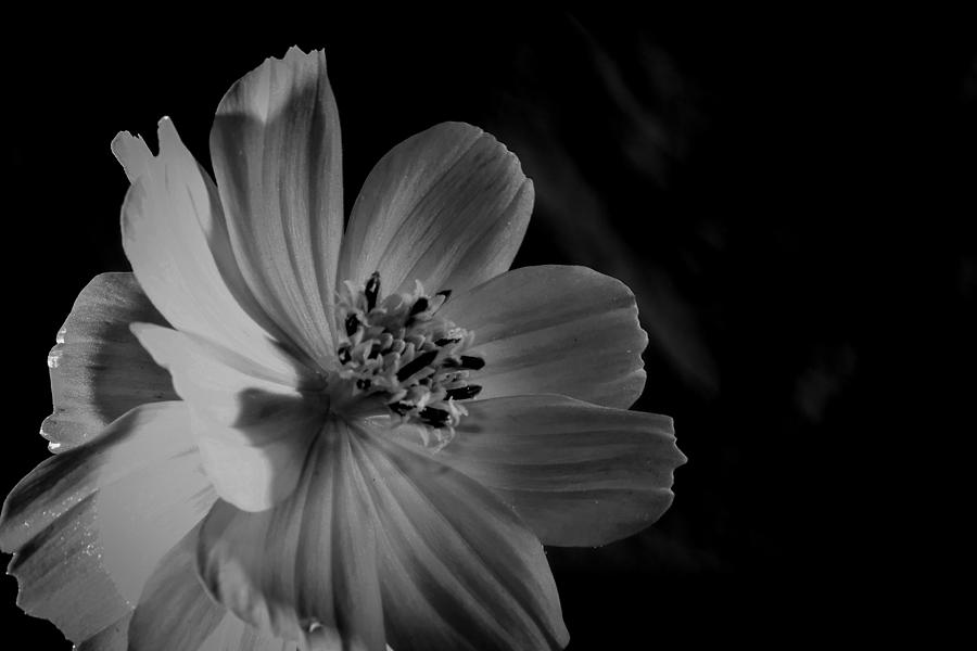 Flower Photograph - Yellow-bw-1 by Fabio Giannini