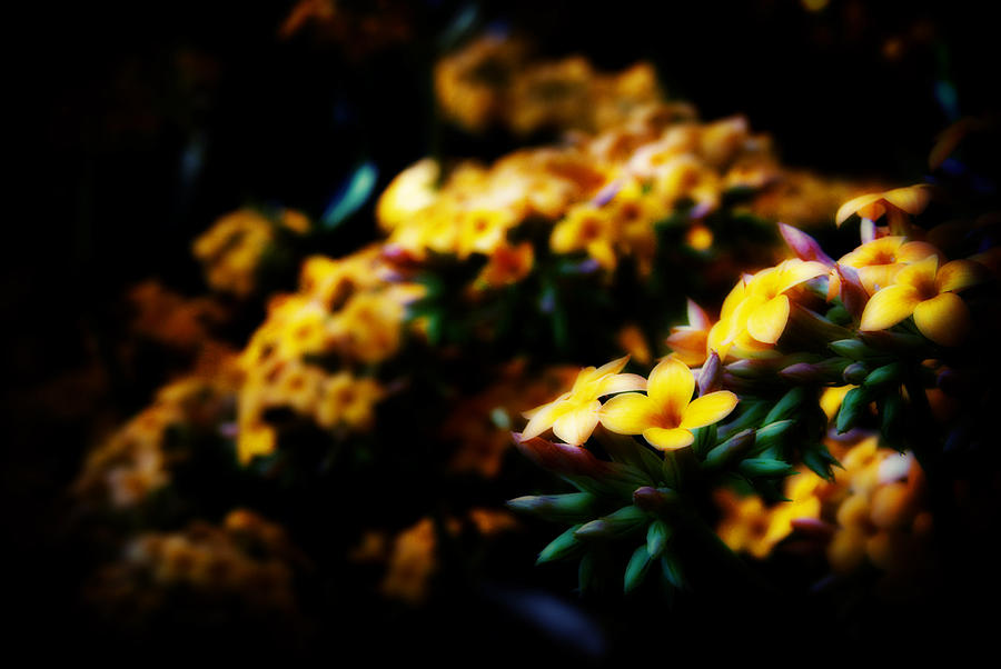 Flowers Photograph - Yellow by Cabral Stock