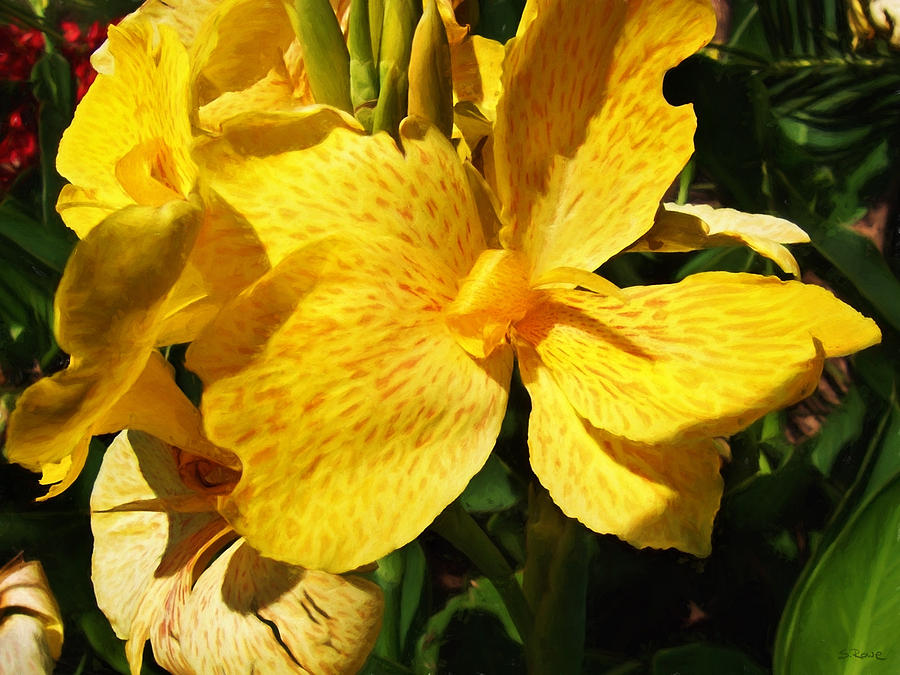 Canna Lily Photograph - Yellow Canna Lily by Shawna Rowe