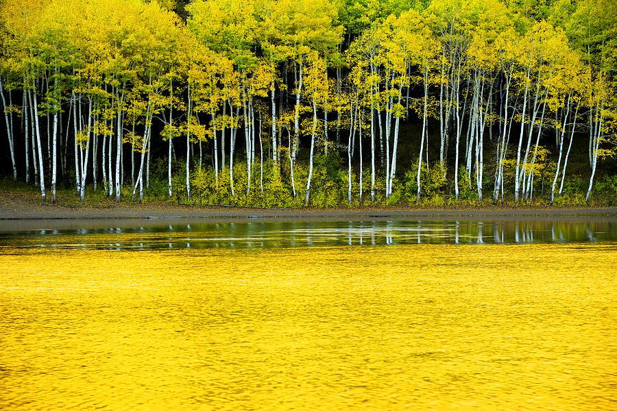 Nature Photograph - Yellow by Chad Dutson