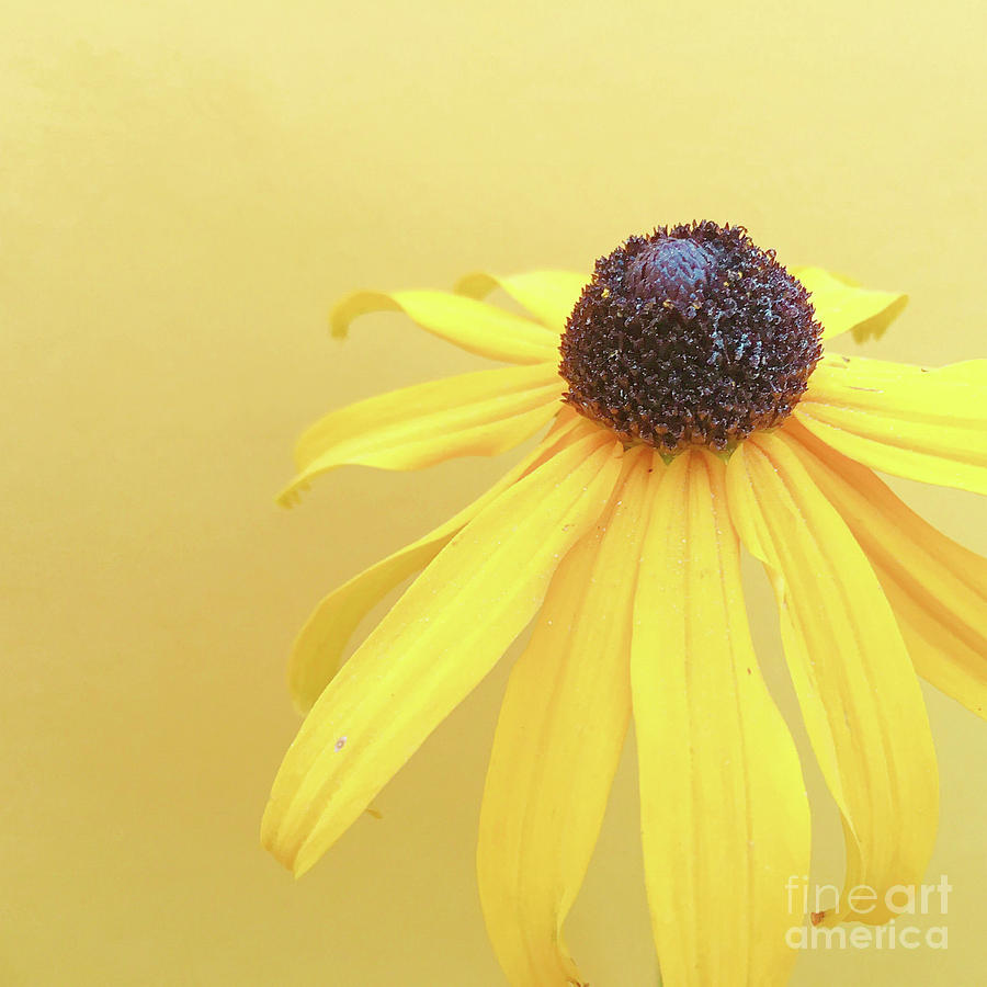 Yellow by Cindy Garber Iverson