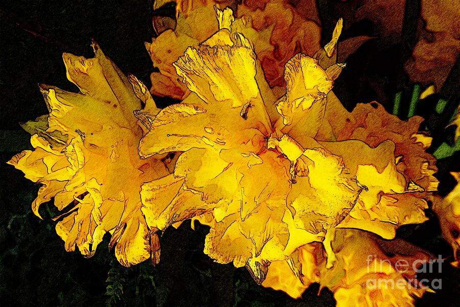 Abstract Photograph - Yellow Daffodils 4 by Jean Bernard Roussilhe