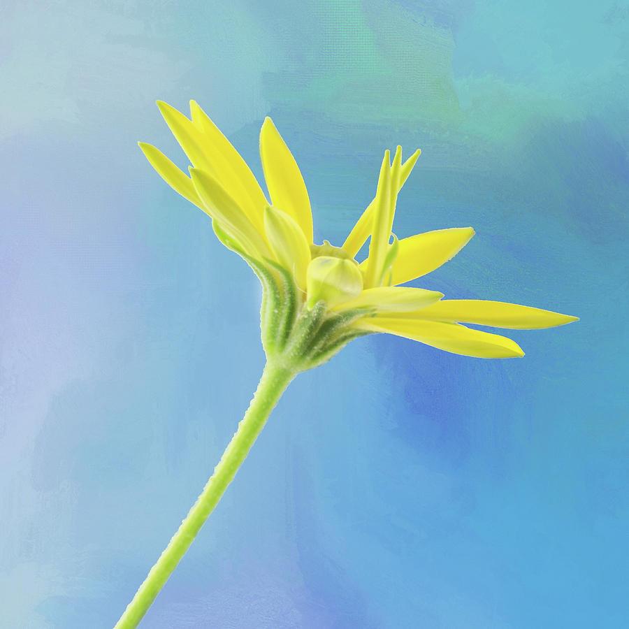 Yellow Daisy by Ken Mickel