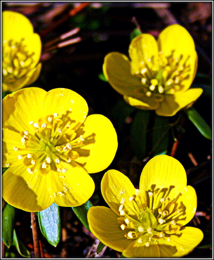 Flowers Photograph - Yellow by Elizabeth Babler