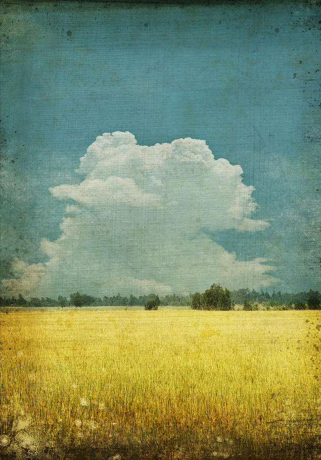 Abstract Photograph - Yellow Field On Old Grunge Paper by Setsiri Silapasuwanchai
