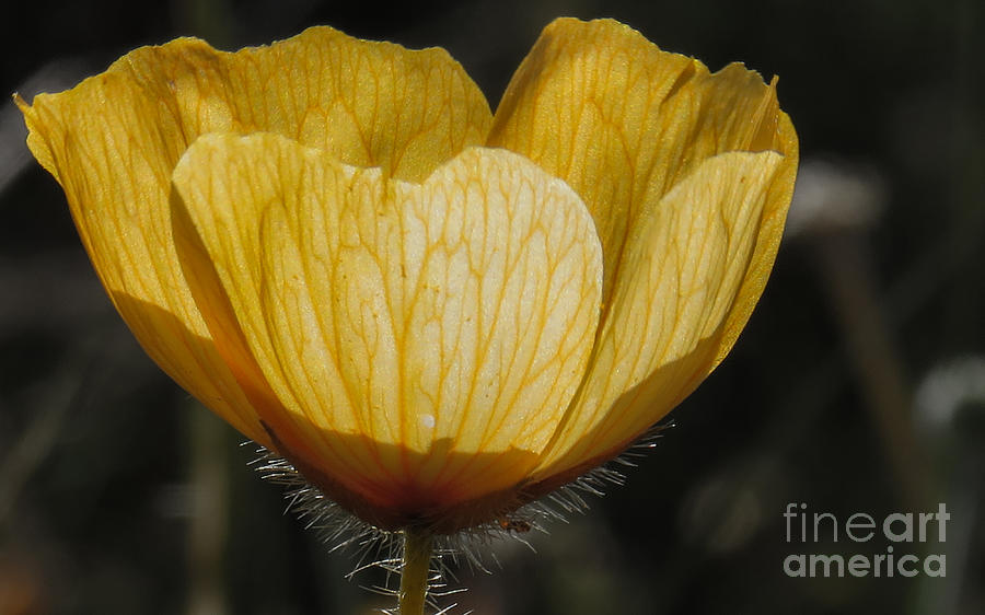 Nature Photograph - Yellow Flower 4 by Christy Garavetto