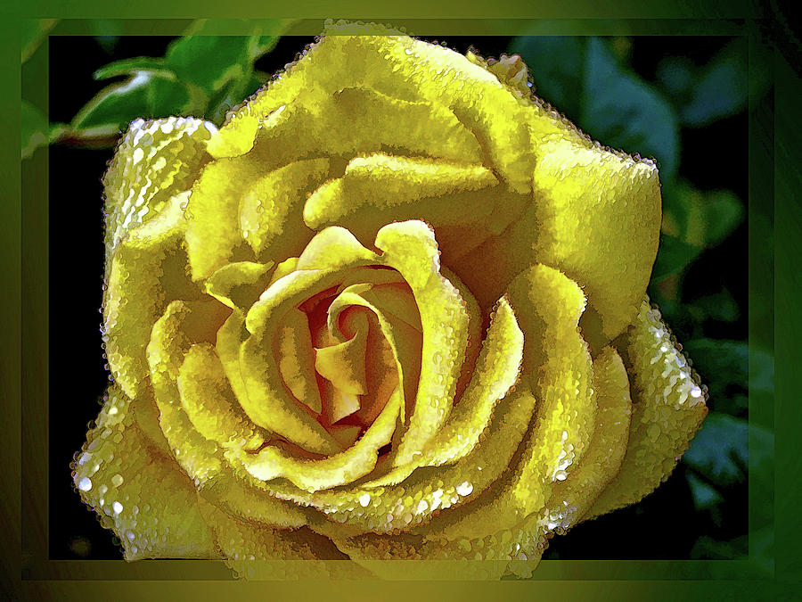 Yellow Flower Carpet Rose Photograph By Peter Hogg