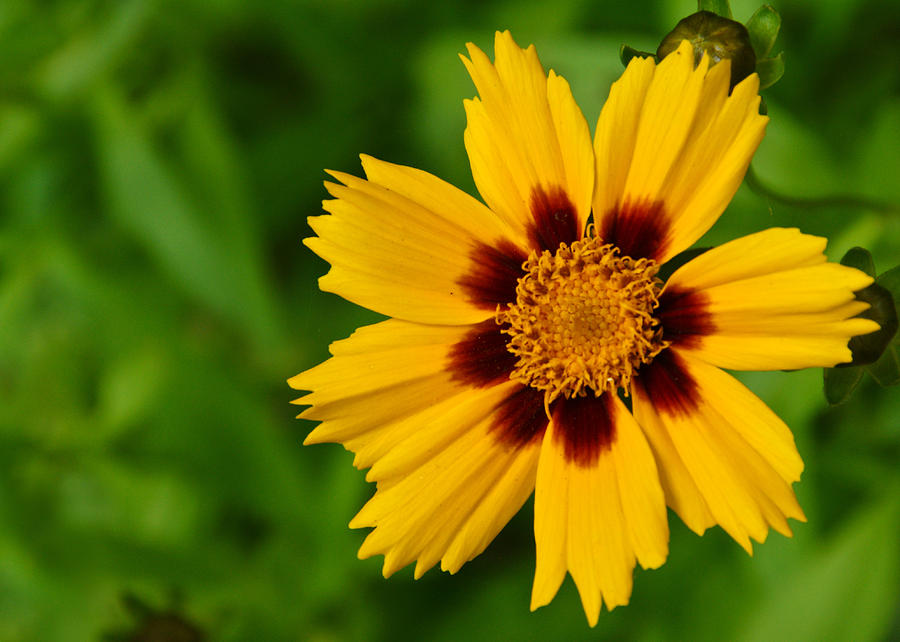 Flower Photograph - Yellow Flower by Edward Myers