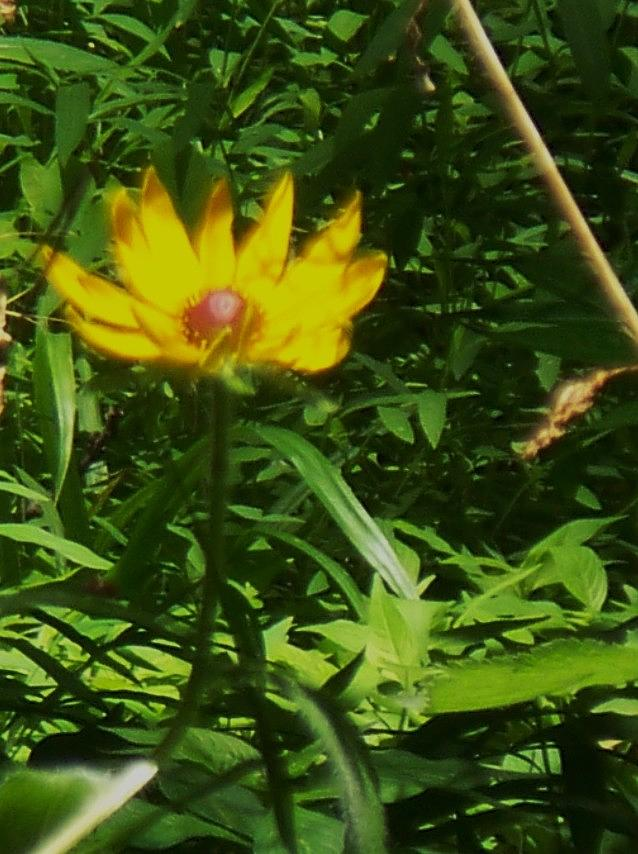 Flower Photograph - Yellow Flower by Eric  Schiabor