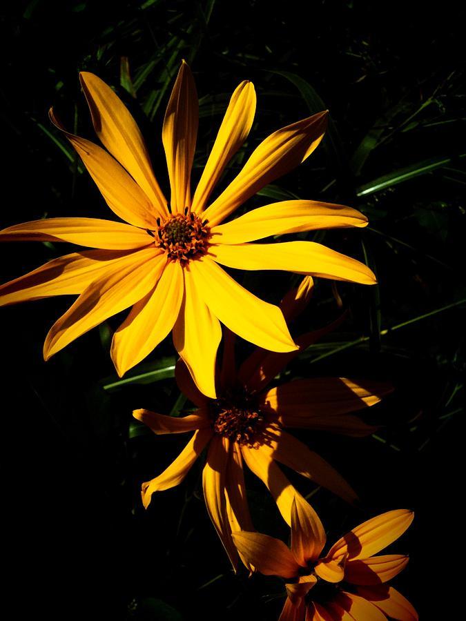 Flower Photograph - Yellow Flower I by Joaquin Novak-Zarate