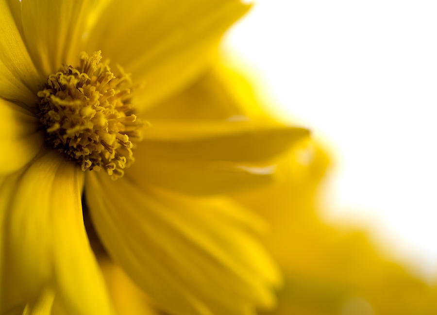 Flower Photograph - Yellow Flower by Jessica Wakefield