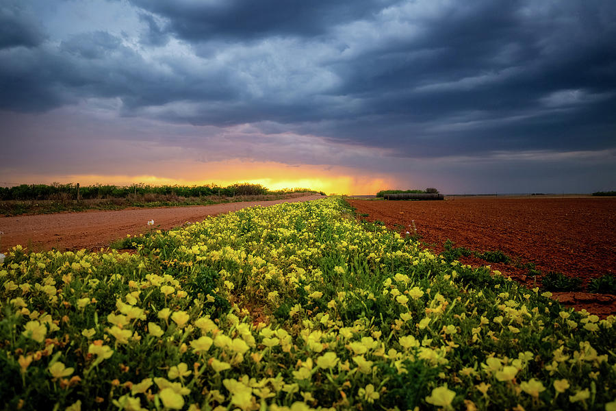Yellow Flower Road Wildflowers At Sunset In Texas Photograph By